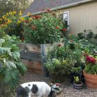 raised garden beds, raised beds, garden, NOCO